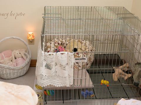 Chloe's sleeping spot in bedroom