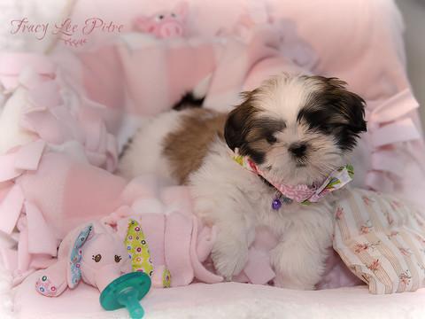 Chloe at 9 weeks old