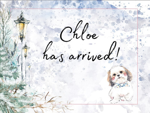 Chloe has joined our family