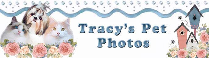 Tracy's Pet Photos banner