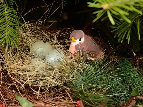 A Cozy Nest