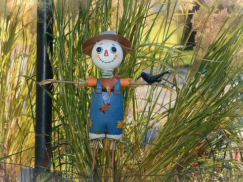 Garden Scarecrow