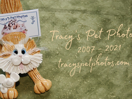 Tracy's Pet Photos - Through the Years