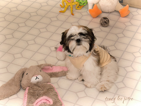 Chloe with her bunny
