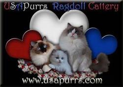 USAPurrs Ragdoll Cattery