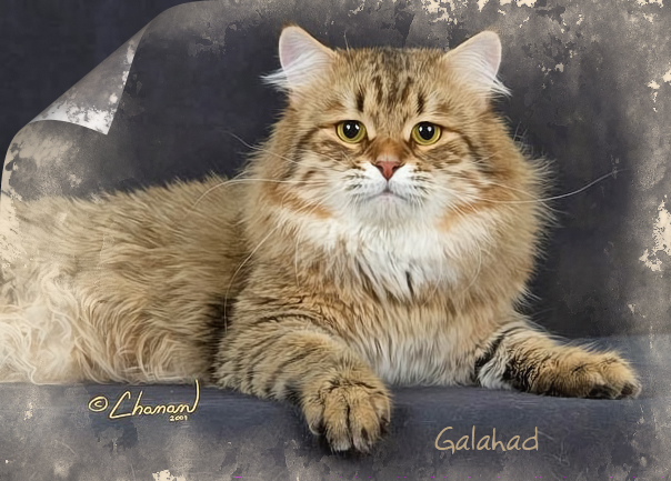 Prekrasne Galahad
