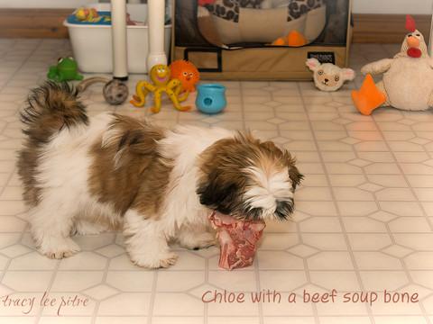 Chloe loves raw beef bones