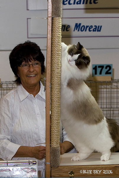 Ryder at a cat show