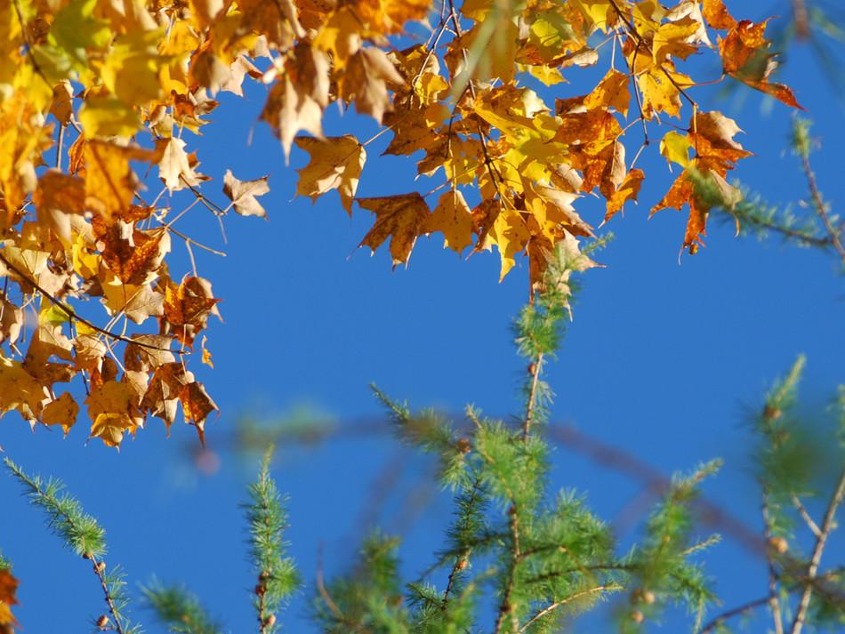Autumn Blue Sky