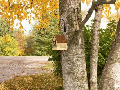 Little Yellow Birdhouse