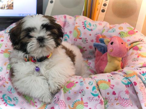 Eight week old Chloe