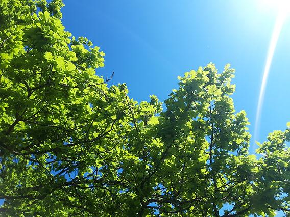 Green oak leaves WORKSHOPS (1).jpg
