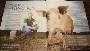 Bofs Hogs in the Press