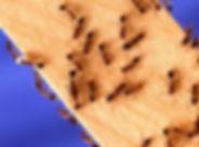 ants-bark-bee-264129.jpg