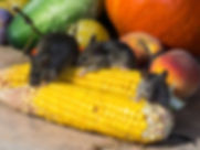 vegetables-928977_1920.jpg