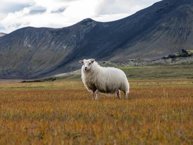 Island Hochland und Nordlichter (0015_.j