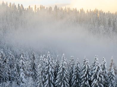 Raten Winter (0002_.jpg