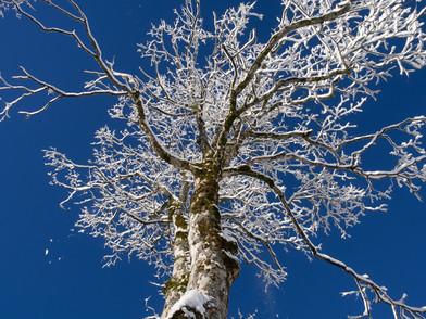Amden Winter 2013 (0001_.jpg