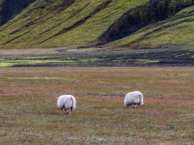 Island Hochland und Nordlichter (0019_.j