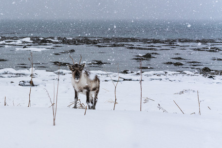 28. Februar 2018-SL-Tromso-11.jpg