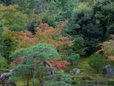 JAPAN (0029_.jpg