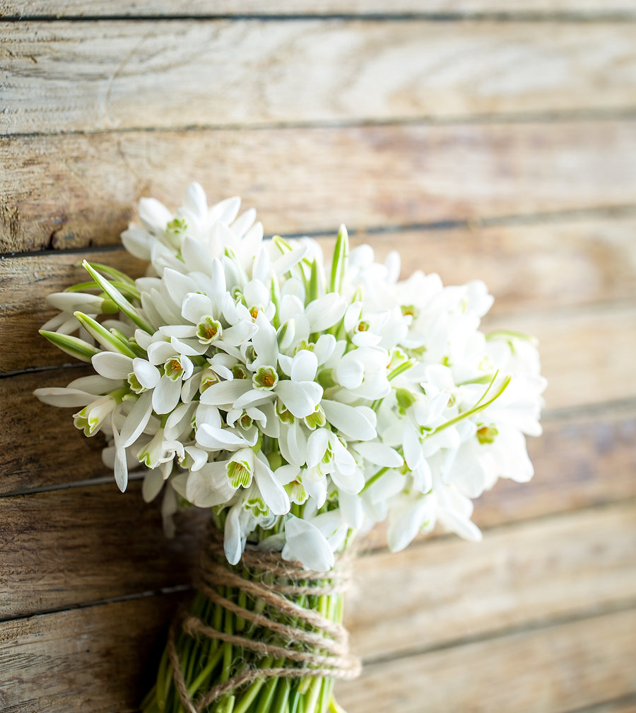 bouquet of beautiful snowdrops lies on a