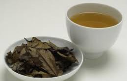 Bancha 番茶