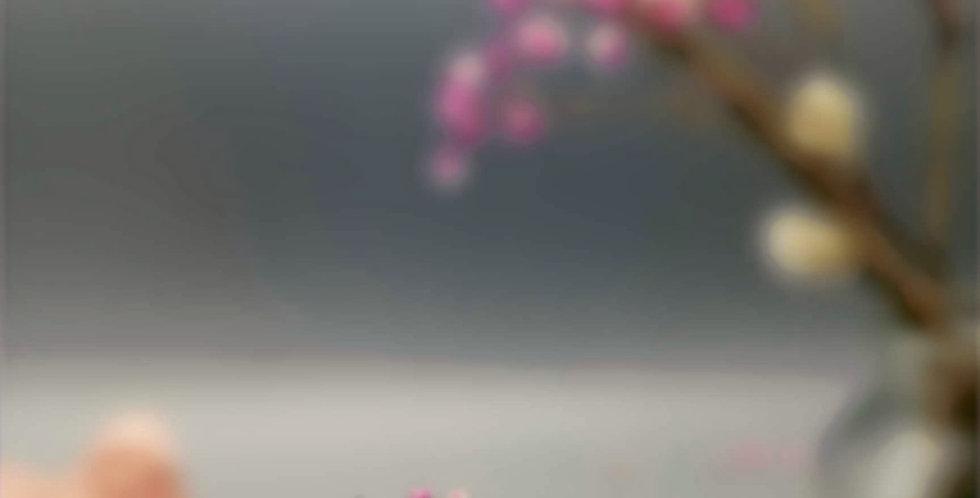 Serie Schmetterling
