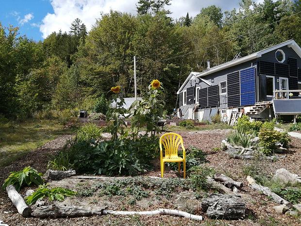 House sunflowers.jpg
