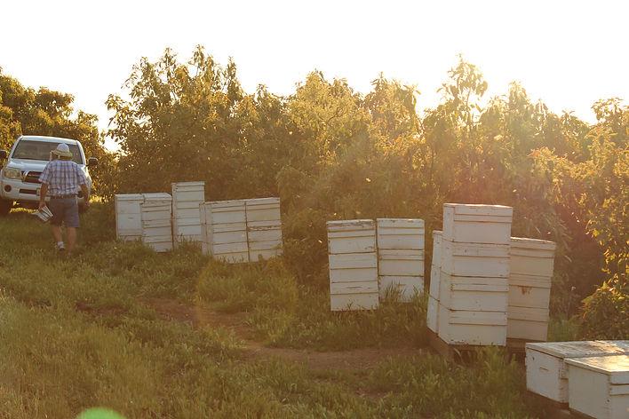 Bee Yard