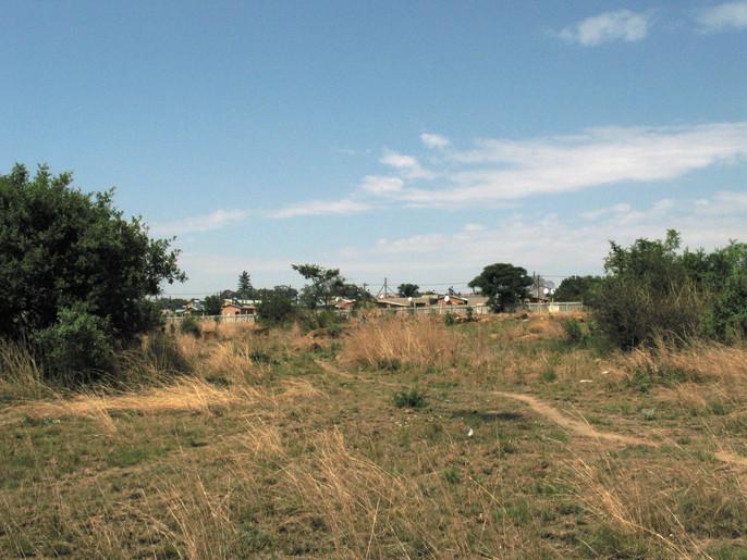 Path, Cosmo City