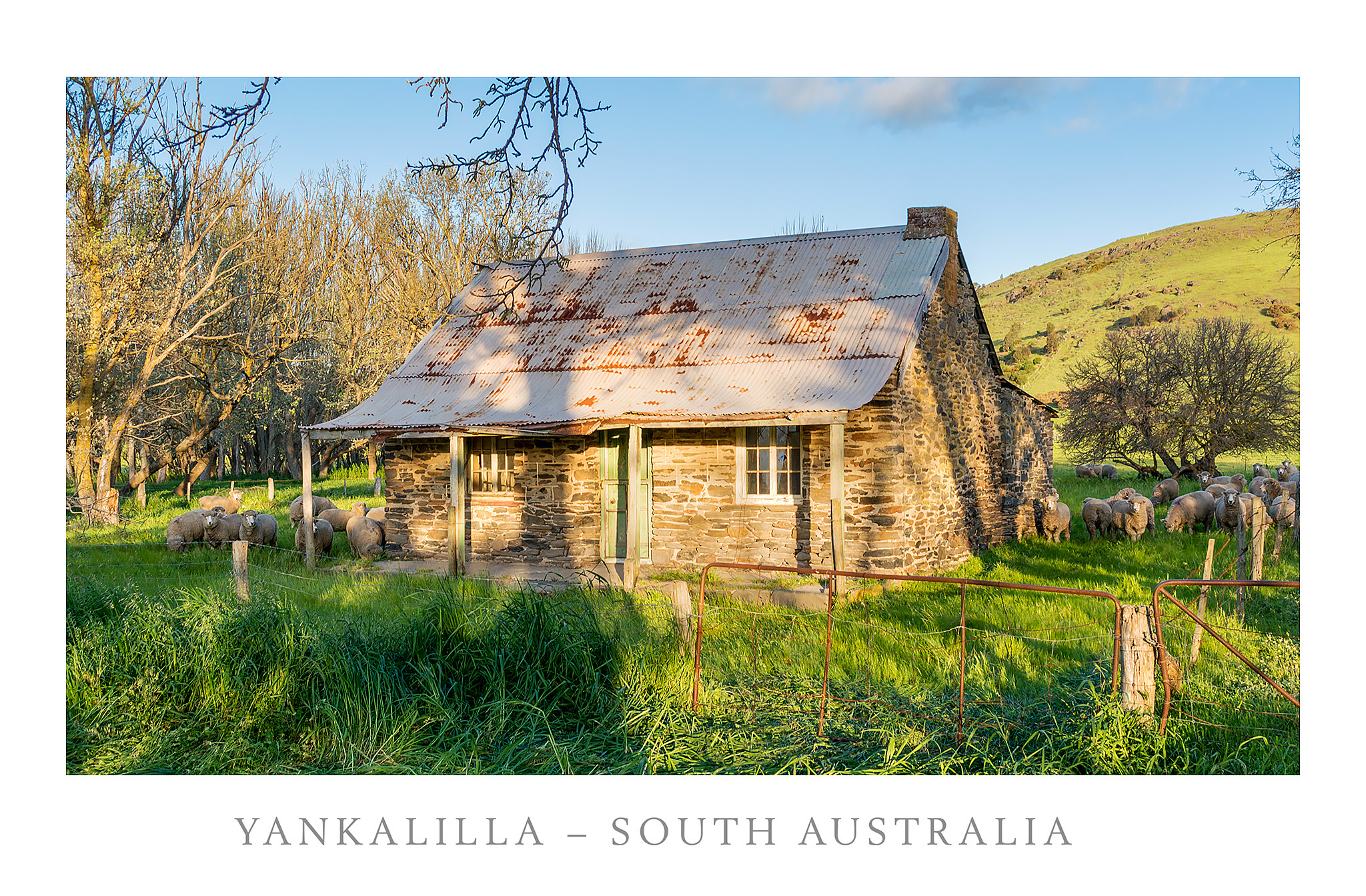 Cottage And Sheep Yankalilla
