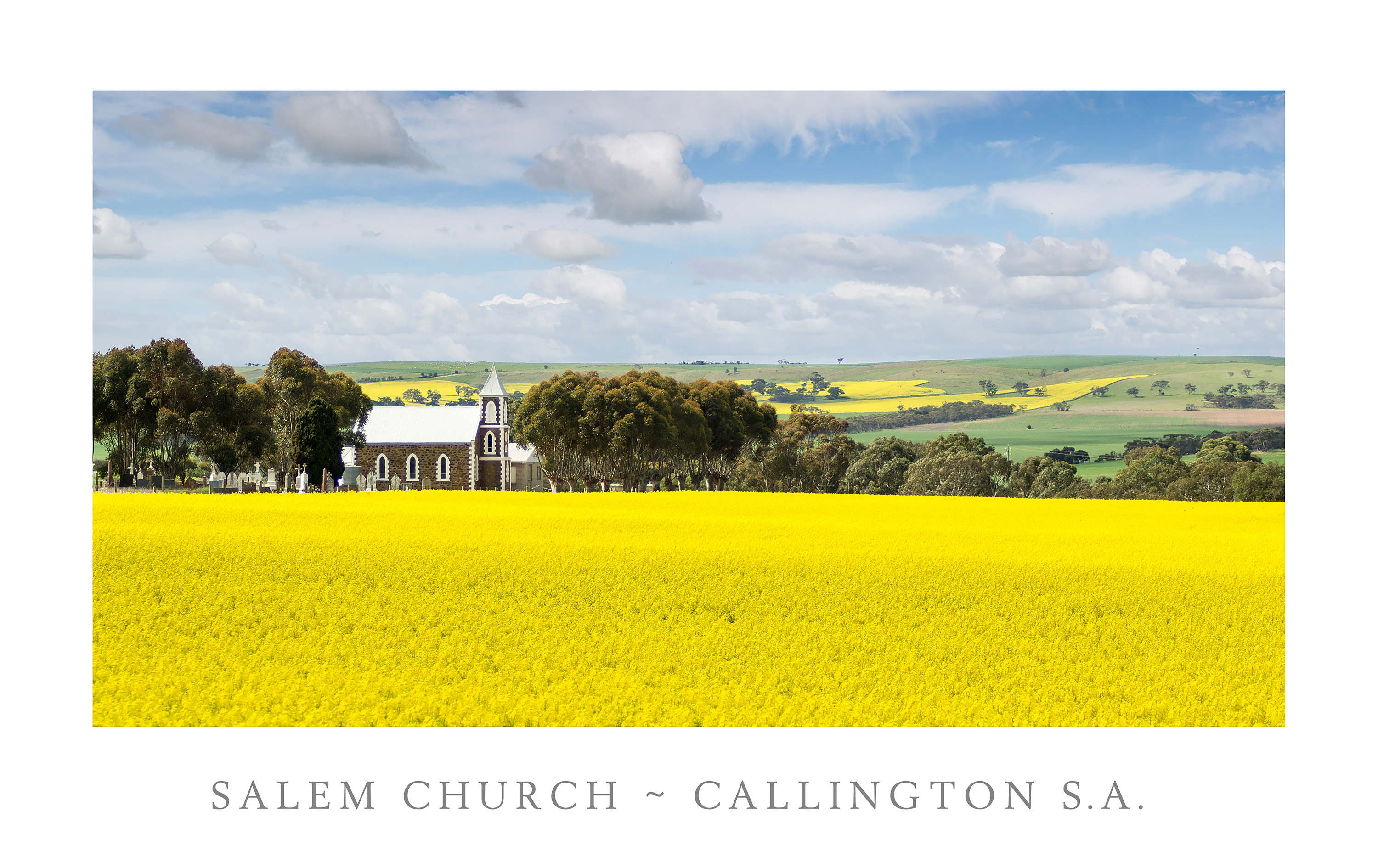 Salem Church with Canola Field