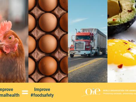 OIE en el campo de la seguridad sanitaria de los alimentos derivados de la producción animal