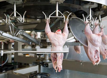 Control temprano de patógenos en la planta de procesamiento de aves