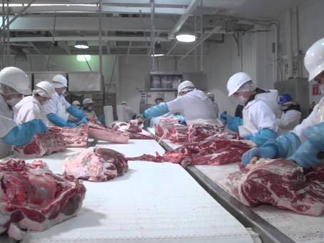 Optimizando la eficiencia en las líneas de deshuese de carne porcina.