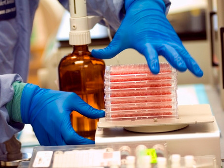 Enfermedades, infecciones e infestaciones de la Lista de la OIE en vigor en 2019.