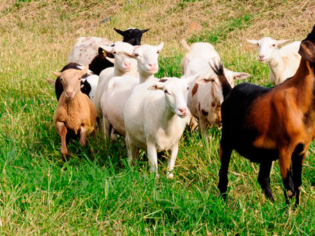 SENASICA, centinela de la salud animal en México