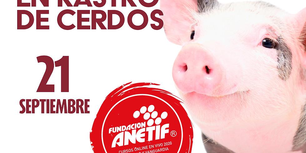 Bienestar animal en rastro de cerdos