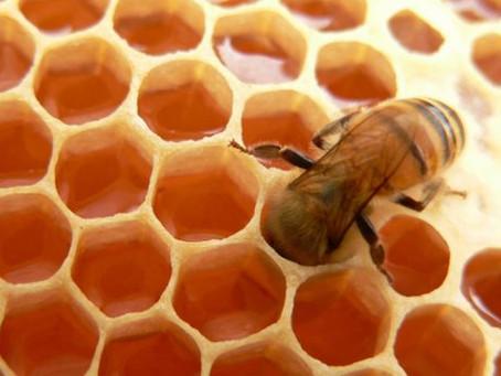 ¿Sabías que existen cerca de 320 variedades de miel de distintos orígenes florales?
