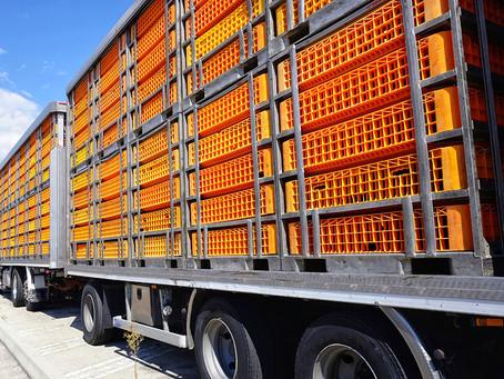 Moviliza tus mercancías reguladas de la especie avícola en Jalisco, Guanajuato y Puebla