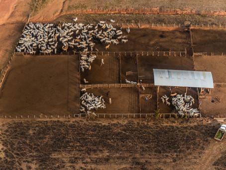 El consumo de carne de res gana terreno en China como efecto de la Fiebre Porcina Africana