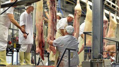 Alemania podría tener una gran reducción en la producción de carne de cerdo en 2021