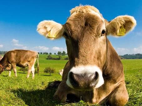 Bienestar animal: un atributo emergente a escala mundial.