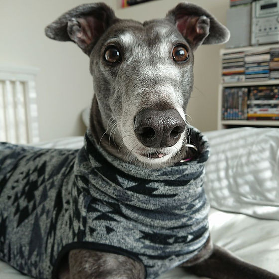 Do you supply any accessories when I adopt my greyhound?