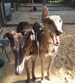 Kiwi and Darla