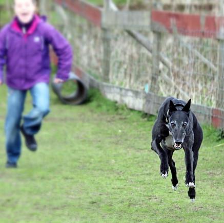 Greyhounds and children