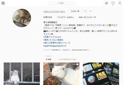 instagram さくらかおるこ