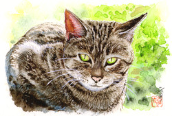小麦堂の猫