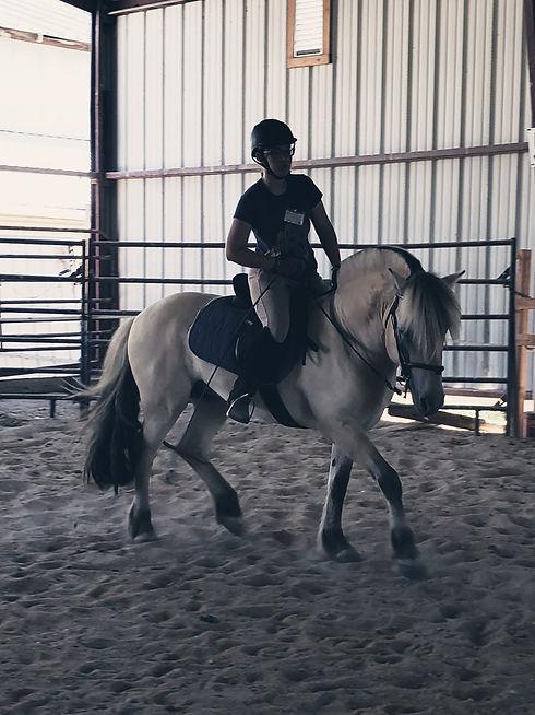 Norwegian Fjord stallion